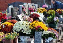 Photo of ¿Sembrar flores donde puede haber bosques, para cortarlas y llevarlas a tumbas de cemento?